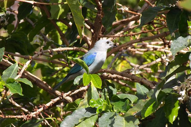 Blur Bird Coffee Angermine