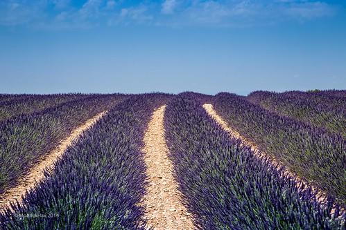 france frankreich provence südfrankreich lavendel hochplateau lavende moustierssaintemarie provencealpescôtedazur canonef24105mmf4lisusm eos6d plateauvalensole juni2014