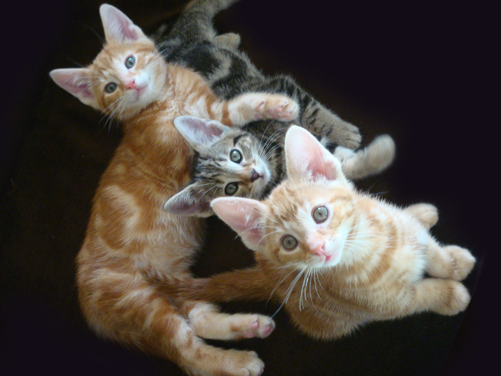the seven session of foster kittens graduate for 2008