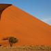 Dune 45, Sossusvlei, Namibia by Neha & Chittaranjan Desai