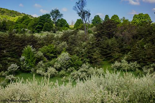 camping cemetery unitedstates pennsylvania memorialday shawneestatepark buffalomills madleycemetery