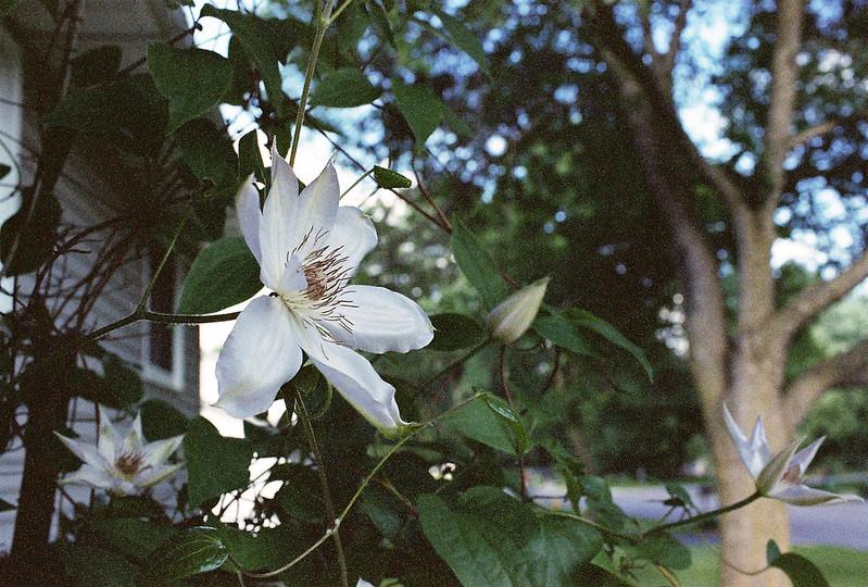 Garden - June 2014