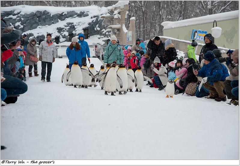 Day5 - 旭山動物園 - 企鵝散步-54