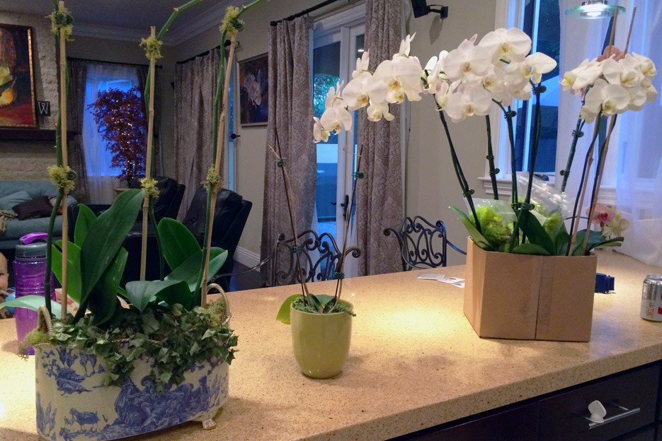 051314_orchids05