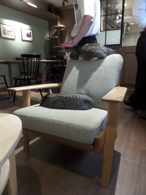 Calaugh Cat Cafe