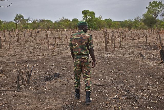 africa trees nature forest timber farming environment agriculture grazing bfa burkina burkinafaso deforestation faso livelihood overgrazing tiogo climateinvestmentfund forestinvestmentprogram