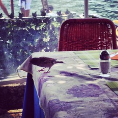 Passerotti #giriingiro #lagomaggiore #isolabella #cheaphappiness