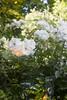 Jardins, jardin aux Tuileries 2014_10