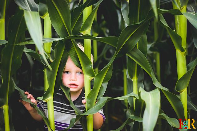 29/52 - Sweet Boy in Sweet Corn