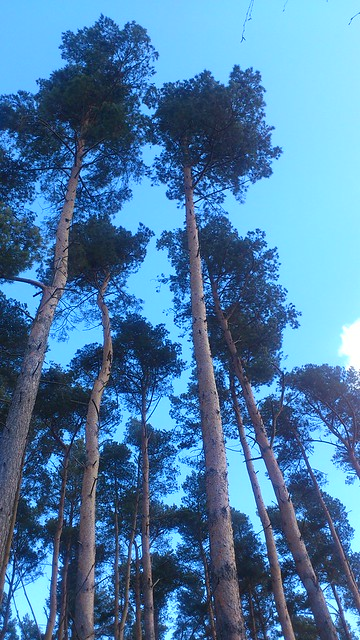 Bow Brickhill to Woburn Sands