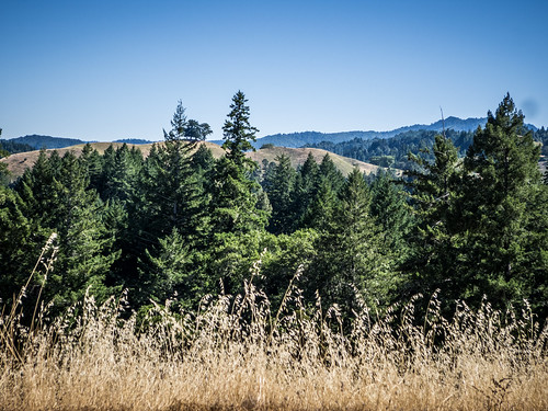Coastal Redwoods and Fog-085