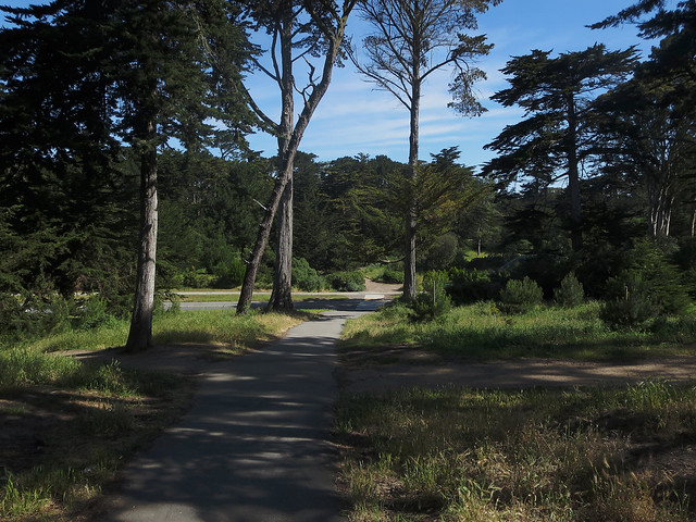 in Golden Gate Park, San Francisco (2014)