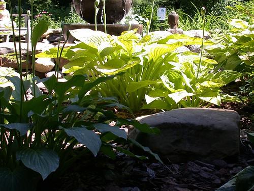 Pine Ridge Gardens