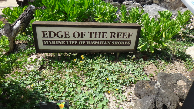 Hawaii Trip 2013