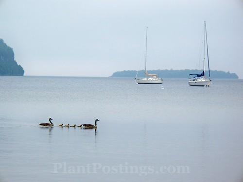 geeseboats