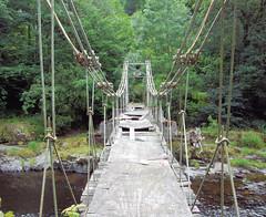 rope bridge(0.0), suspension bridge(1.0), canopy walkway(1.0), jungle(1.0), bridge(1.0),