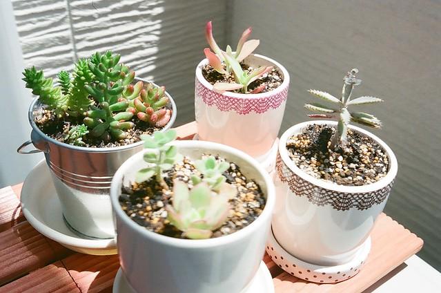 140722_Plant 4