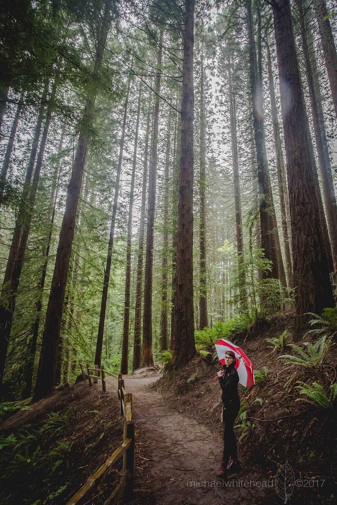 Rainy Portland wander