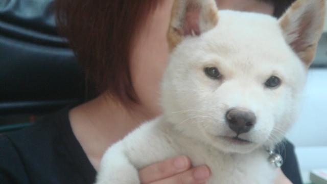 2011-08-26-柴犬牛奶, Sony DSC-T50