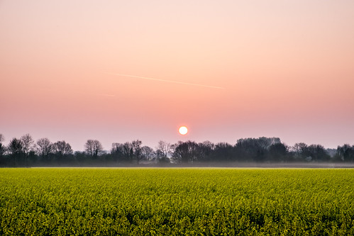 countryside fuji fujifilm norfolk pink purple spring sunrise watton xt1 crop farming field rapeseed yellow norwich uk