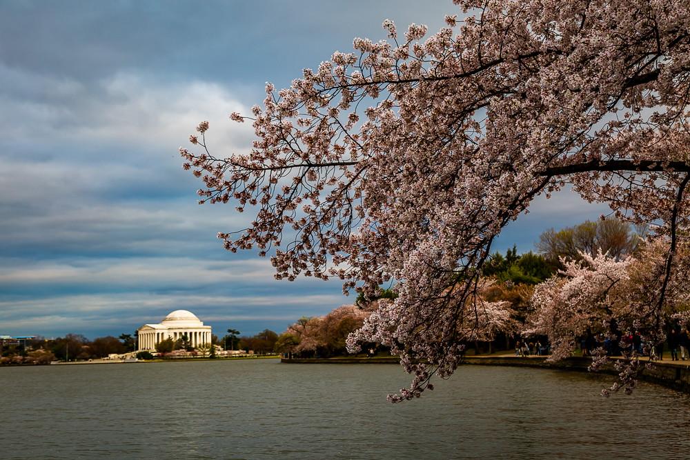 2017 华盛顿樱花-20