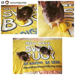 Where in the world is the New Wave Swim Buoy now? Lake Linganore, Maryland 💛💛💛 . . #Repost @wcrumpjump with @repostapp ・・・ Churro and Puck love the amazingly soft New Wave Swim Buoy towel that I will be stealing as s