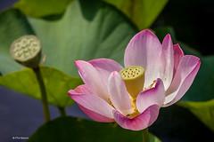 Royal Botanical Gardens - Hamilton