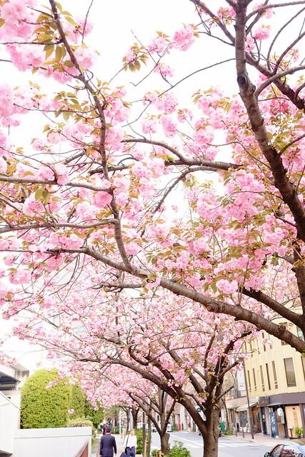 Ginza Sakura street 05