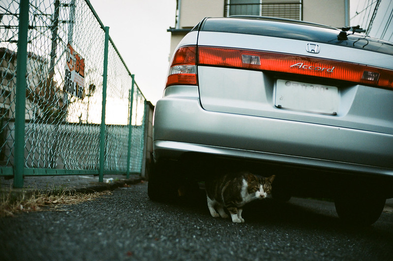 cat and parking