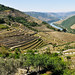 Douro Valley, enroute to Penela da Beira by Gail at Large + Image Legacy
