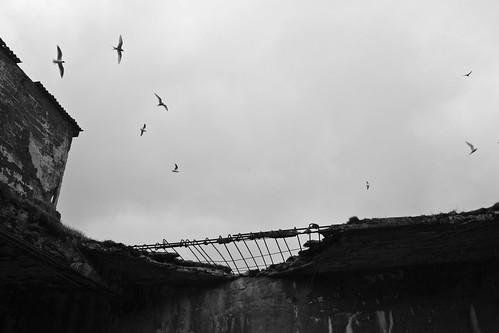 bird monochrome silhouette iceland islandia cw ísland islande eyri strandir