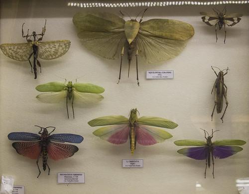 Museo de la Naturaleza Cantabria