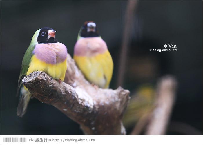 【新竹景點推薦】森林鳥花園~親子旅遊的好去處!在森林裡鳥兒與孩子們的樂園35