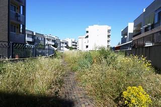 Noicattaro. Aree a verde abbandonate