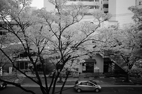 niigata monochrome 52