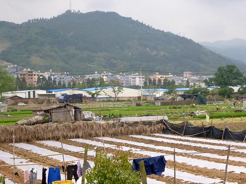 Fujian-Xiapu-Champs (3)