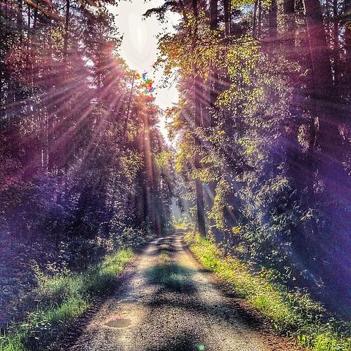 Morgensport #morning #run #sun #thüringen #germany #sunrise #lichtung