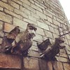 My Homies...gargoyles on the high street.