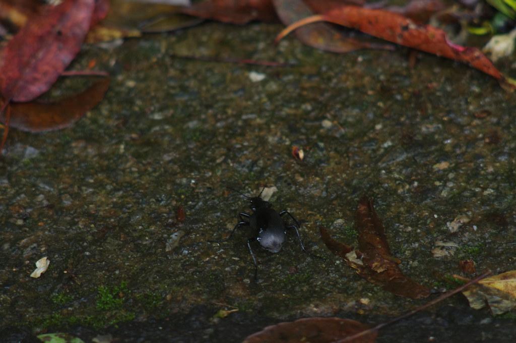 北橫公路的蟲、蛙、蛇