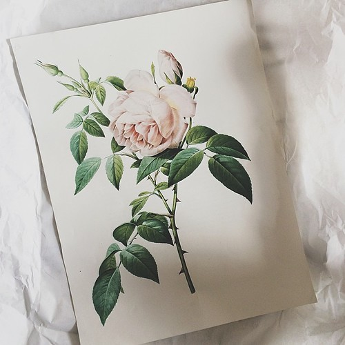 i bought this beautiful rose print today, am so in love with it! now to the difficult part - where to hang it?