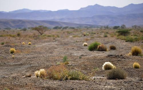 desktop landscape israel desert negev featured arava