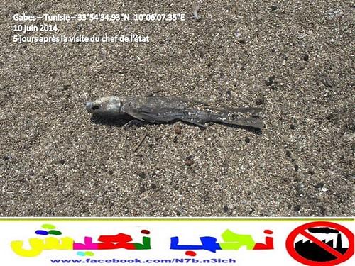 وطني Gabes: Industrial Pollution Choking Region(قابس: التلوث الصناعي يضيق الخناق 14280344027_7f41a3b8
