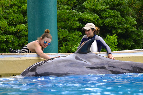 Petting Dolphin at SeaWorld