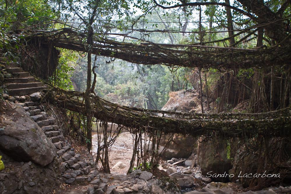 Double deckers living root bridge