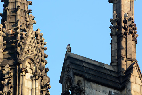 Cathedral Hawk (2682)