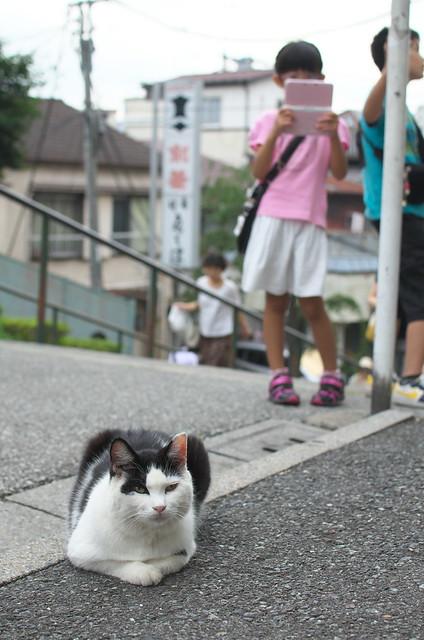 東京路地裏散歩 谷中編 夕やけだんだんのネコ 2014年7月13日