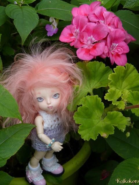 Dragée et geranium
