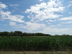 Kukorica és felhők
