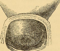 "Image from page 457 of ""The science of eugenics and sex life, the regeneration of the human race .."" (1914)"