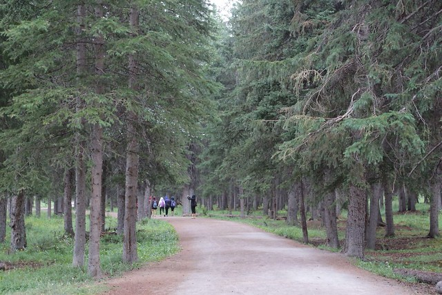 バンフの森